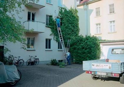 Gartenarbeiten-Efeuentfernung-38